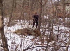 518646787-Police-Use-Taser-To-Save-Entangled-Deer